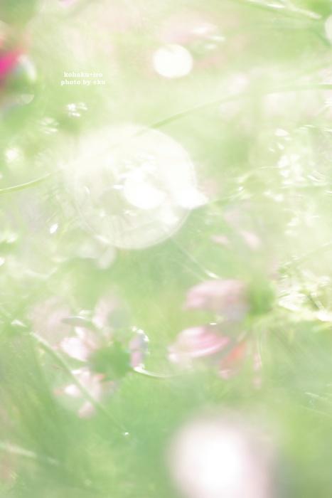 hikarino2.jpg