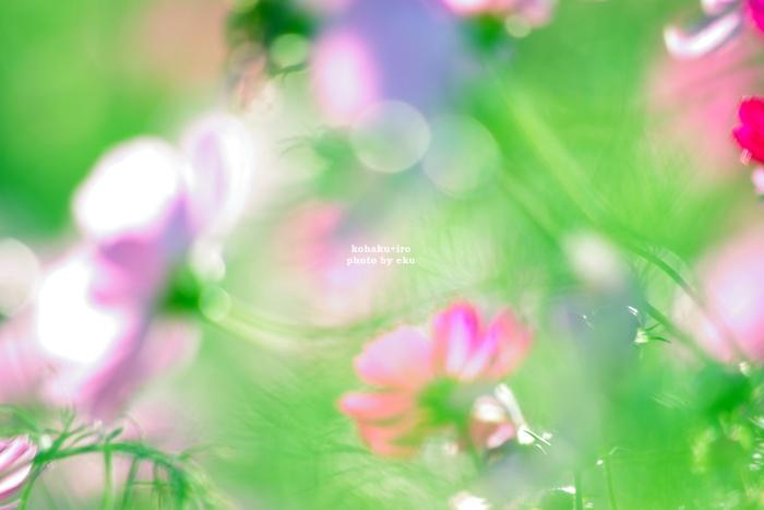 hikarito3.jpg