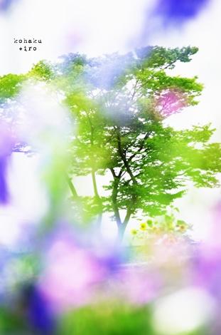 himawari2_20130811222738d38.jpg