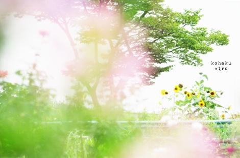 himawari_2013081122273779c.jpg