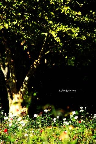 ki_20131008002207b3b.jpg
