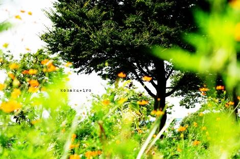 kibanaki2.jpg