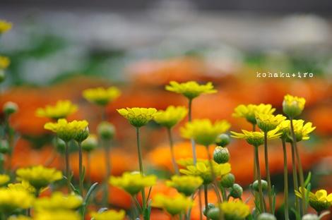 kiiro_20130322003858.jpg