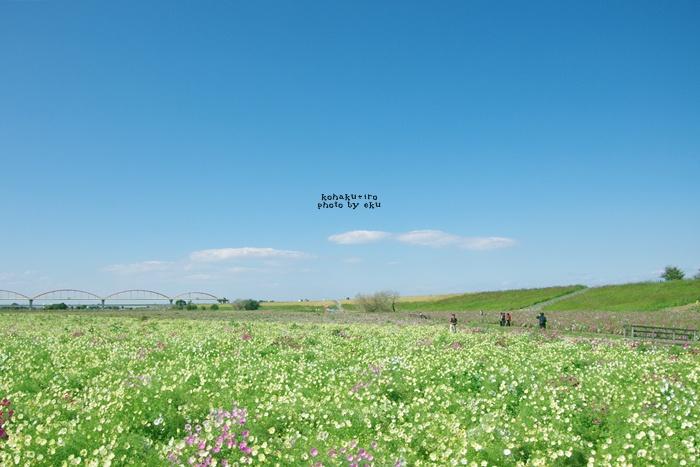 konosu2014-3.jpg