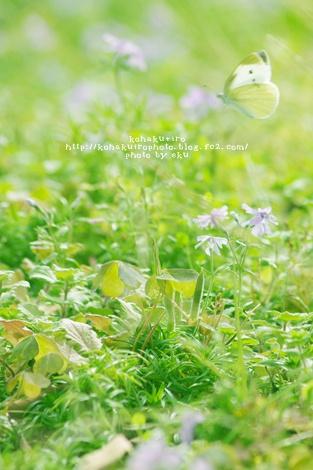 monsiro_20131102115735730.jpg