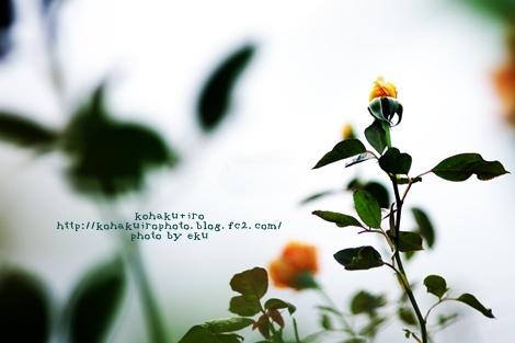 orange2_201310242350302ee.jpg