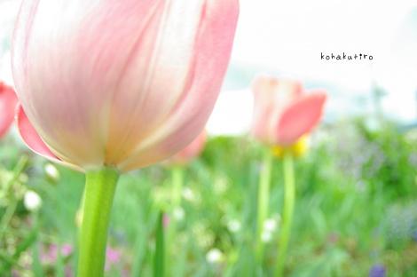 pink_20130422221014.jpg