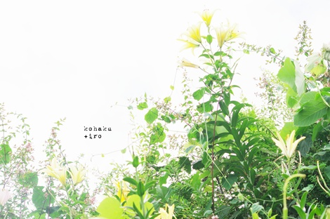 yuri6.jpg