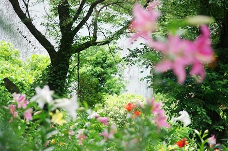 yurisaku2.jpg