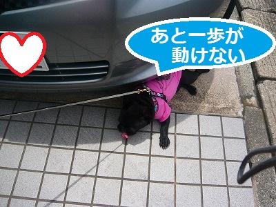 s-17P1070838.jpg