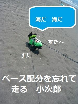 s-17P1070875.jpg