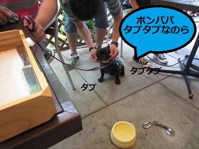 s-20IMG_0370.jpg