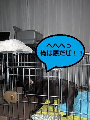 s-20IMG_0411.jpg