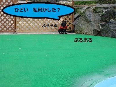 s-20IMG_0755.jpg