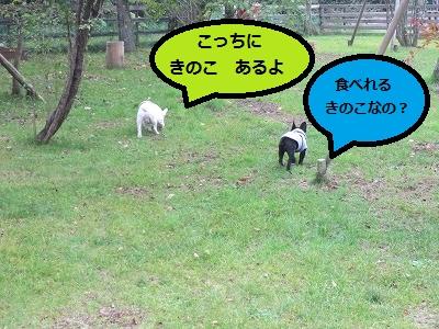 s-20IMG_0770.jpg