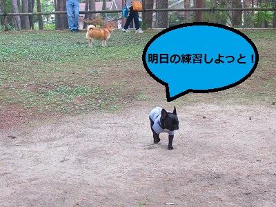 s-24IMG_0713.jpg
