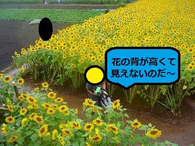 s-24P1090939.jpg