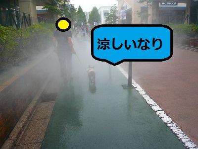 s-24P1100001.jpg