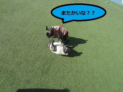 s-25IMG_2494.jpg
