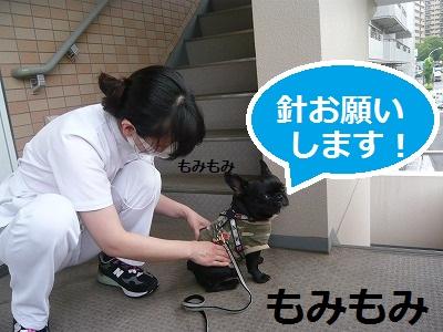 s-9P1080971.jpg