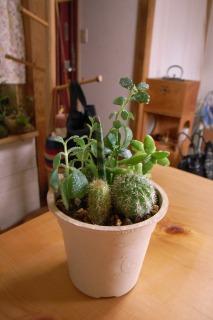 多肉植物サボテン寄せ植え