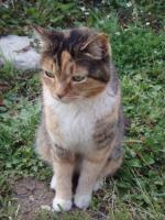 cat_20100610202902.jpg