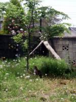 neko_20100523143139.jpg