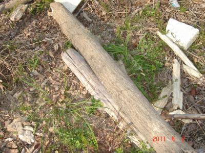 2011.4.2朽木
