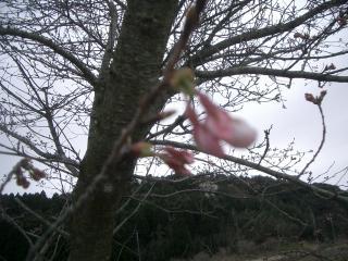 2010-03-28+061_convert_20100329213445.jpg