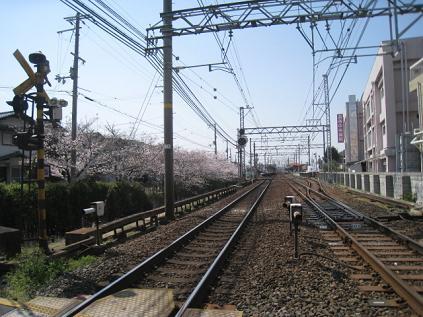 20100403d.jpg