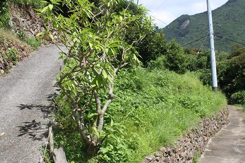 20100706.jpg