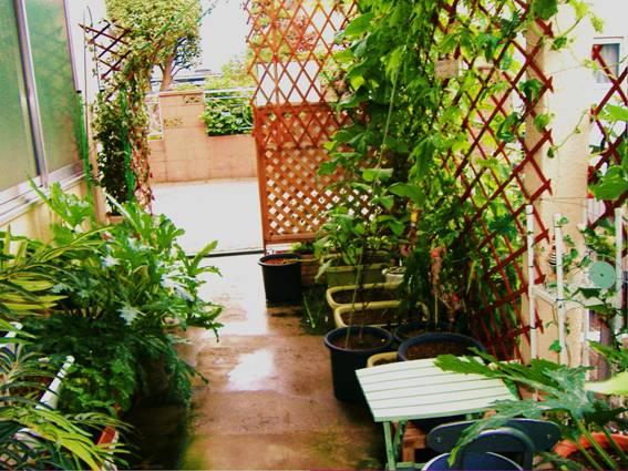 庭先の野菜、ズッキーニ、ゴーヤ