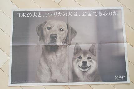 アメリカの犬