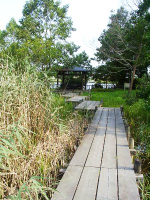 成就院池公園遊歩道