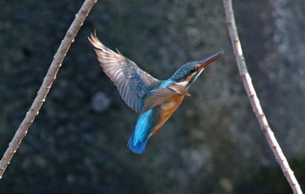 0930_4_♀若鳥の飛翔 Sep 28