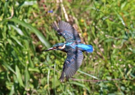 0930_5_♀若鳥の飛翔 Sep 28
