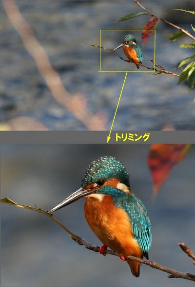 1031_7_400mmで撮った恩田川カワセミ
