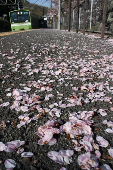 12.04.14 遅かった堅上の桜2