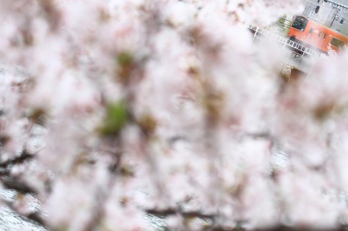 13.04.03 桜の中を走る 天満~桜ノ宮 70-300F4-5.6L