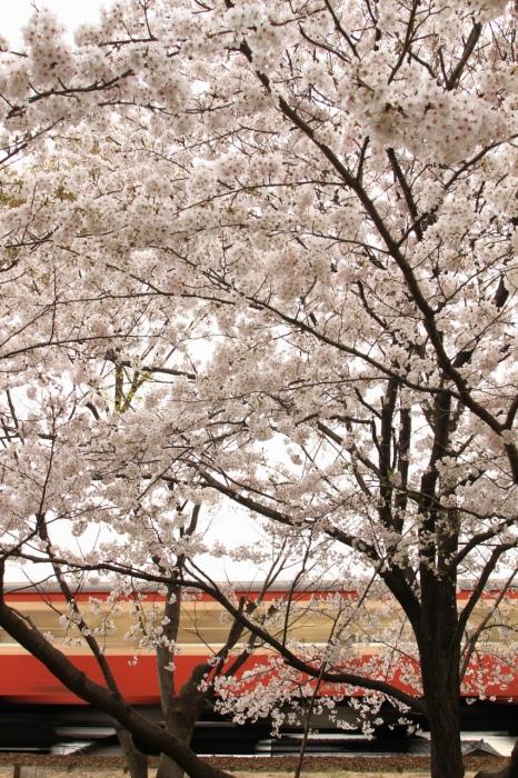 13.04.04 桜の下を キハ20 球場前~西富井 17-35F2.8L