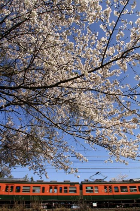 13.04.08 桜の下を 蓬莱~志賀 17-35F2.8L