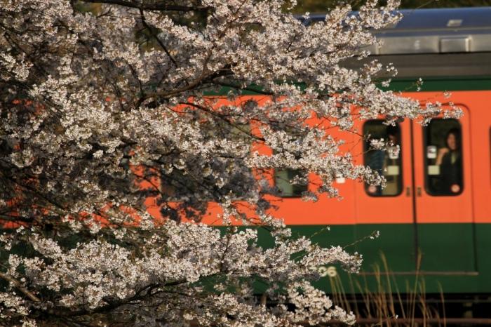 13.04.08 桜と湘南色 70-300F4-5.6L