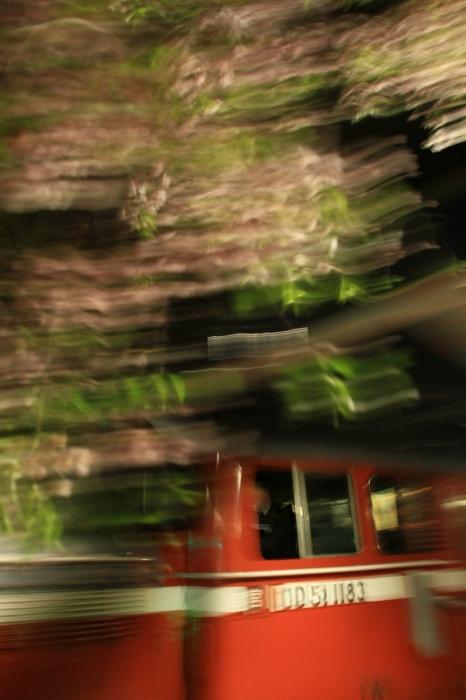 13.04.19 枝垂桜の下を駆ける 桃山 17-35F2.8L