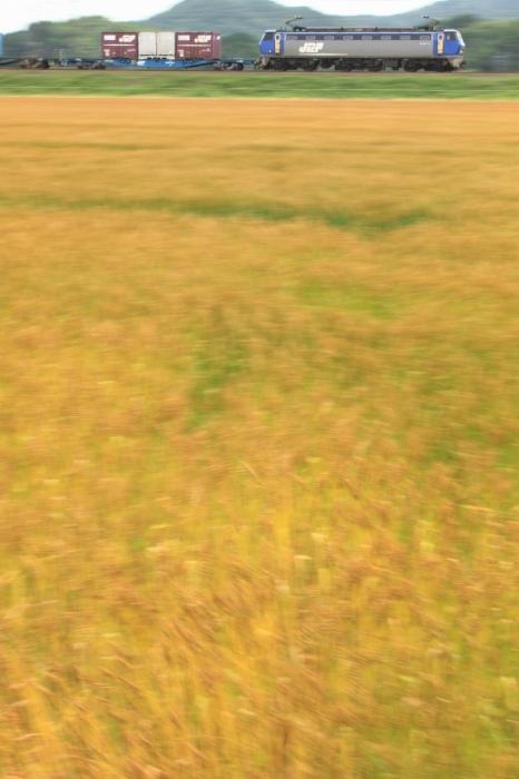 13.06.01 麦畑流し 篠原~野洲 17-35F2.8L