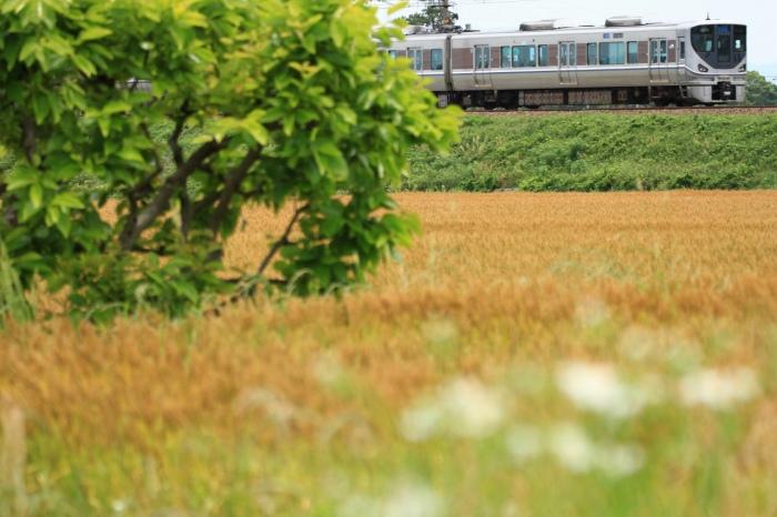 13.06.01 麦畑の昼下がり篠原~野洲 70-300F4-5.6L