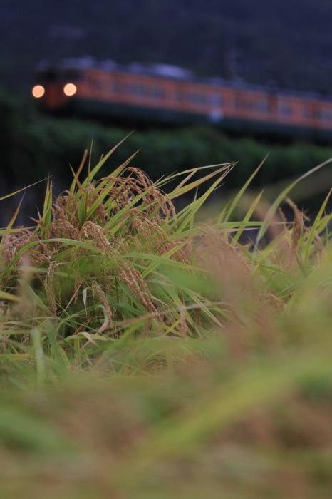 13.09.15 近江米の波打ち際をゆく 北小松~近江高島 70-300f4-5.6L