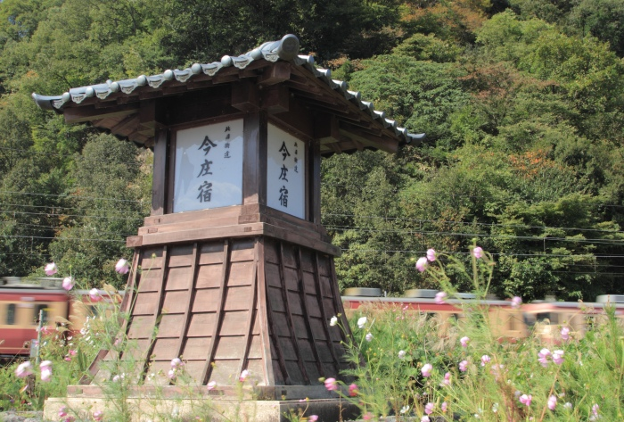 13.10.13 秋桜ゆれる今庄宿 今庄~湯尾 17-35f2.8L2
