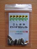 12030222sunflower_seeds.jpg