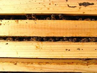 20130226-01staring_bees.jpg