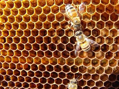 20130315-hive01.jpg